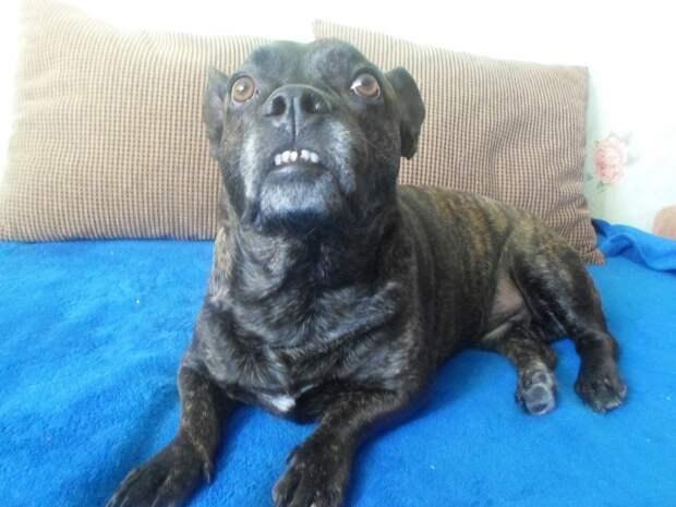 Вокруг пса пролетали машины… Девушка позвала дворнягу, чтобы он не попал в беду!