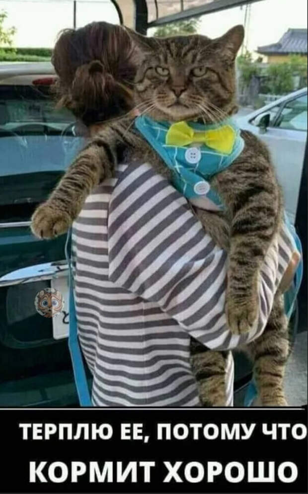 Возможно, это изображение (кот и текст «терплю EE, потому что кормит хорошо»)