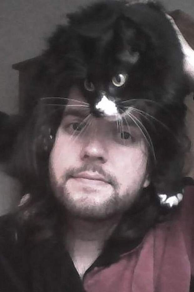 11. Популярность, животные, идея, интернет, кот, фото, шапка