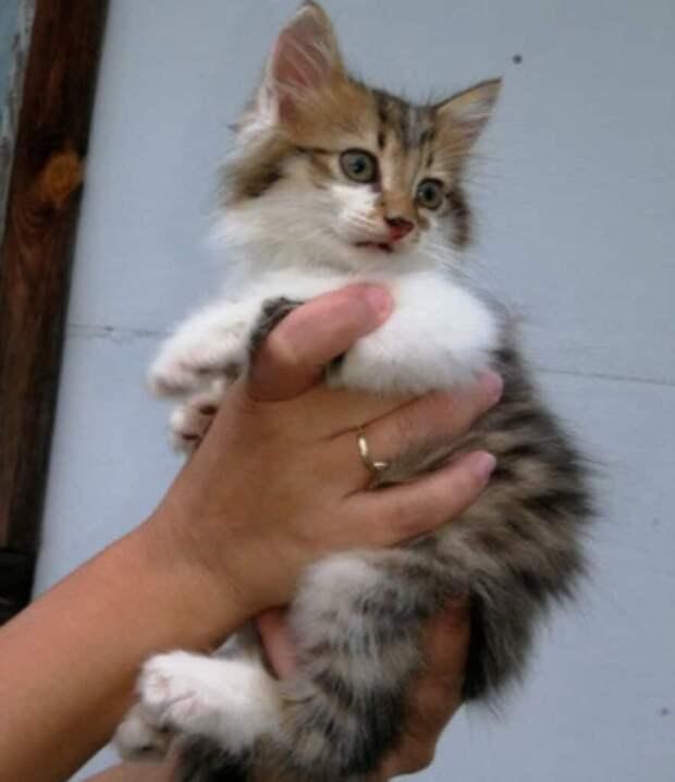 Трёхцветный котёнок оказался очень редким, так как оказался не кошкой