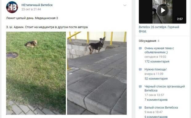 Хозяйка нашла собаку, пропавшую несколько лет назад