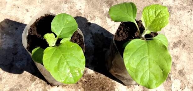 Пришел февраль-пора сажать урожай. Что будем сеять в феврале