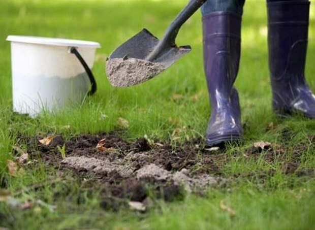 Для раскисления почвы вместо извести можно использовать золу. Единственное, нужно только увеличить дозу внесения золы примерно в
