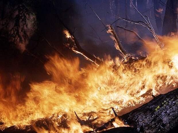 Дым от лесных пожаров на западе США добрался до Европы