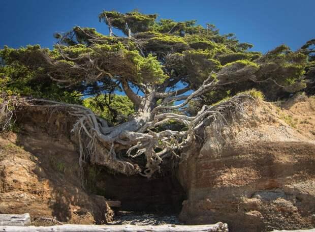 Деревья, не желающие умирать и доказывающие силу природы