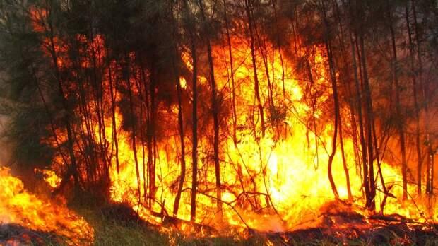 Лесной пожар площадью в 30 тыс. га тушат в Иркутской области