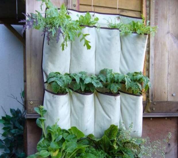 Холщовые мешочки для выращивания