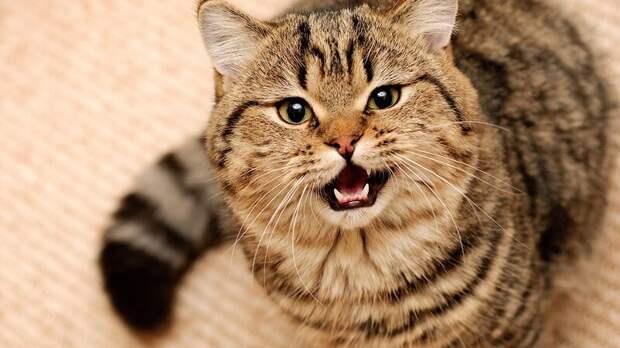 28. Кошка все понимает, но говорит только «мяу» и «мр-р-р-р» жены, интересное, кошки, юмор