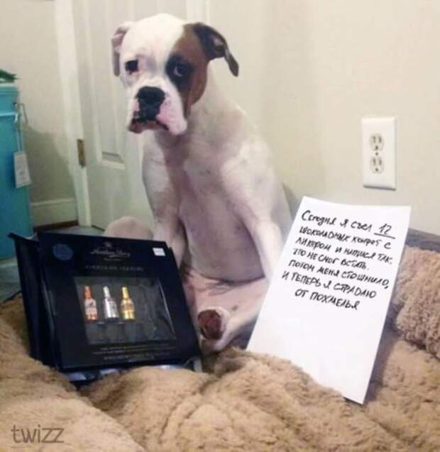 Фото провинившихся собак, которым ну очень стыдно
