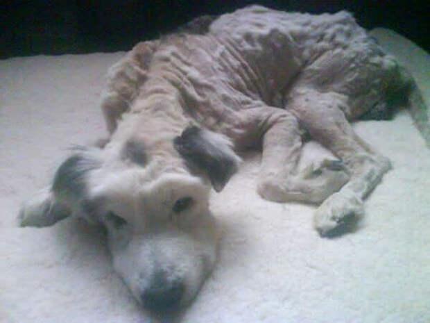 Кто-то довел этого пса до ужасного состояния и бросил на произвол судьбы...
