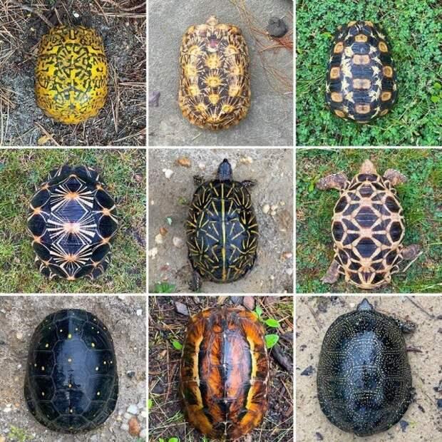 Разнообразие узоров панциря черепахи