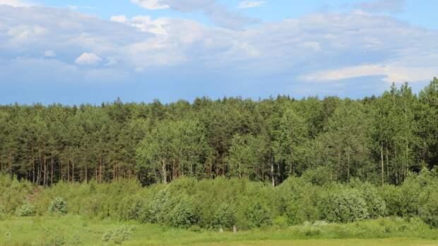 Тело пропавшей школьницы нашли в лесу в Нижегородской области
