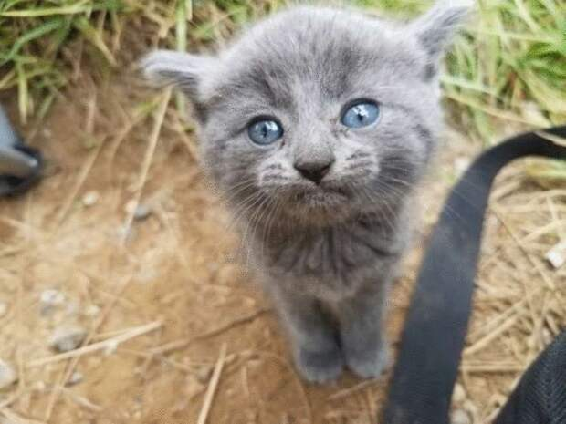Бездомный котенок сам себе выбрал хозяина