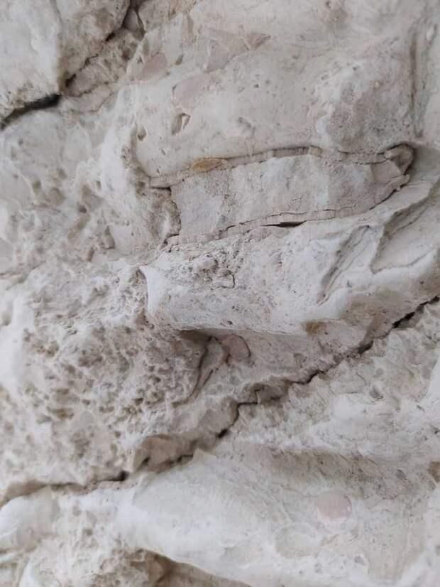 Окаменелости в овраге Кости, Окаменелости, Археология, Длиннопост, Палеонтология