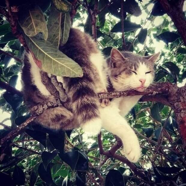 Котоптица на дереве, или 15 фотофактов из мира прекрасного