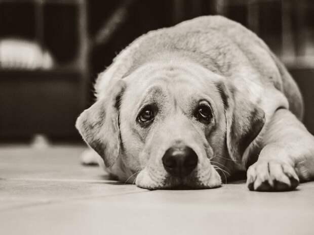 Предприниматель из Перми планирует открыть «Сквер памяти» для владельцев домашних животных