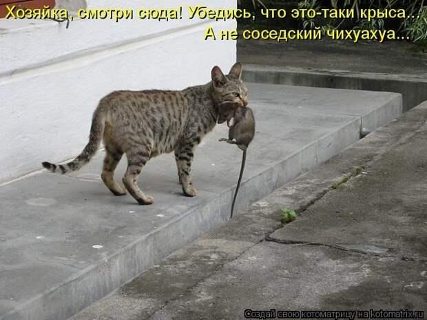 Кошачья норма