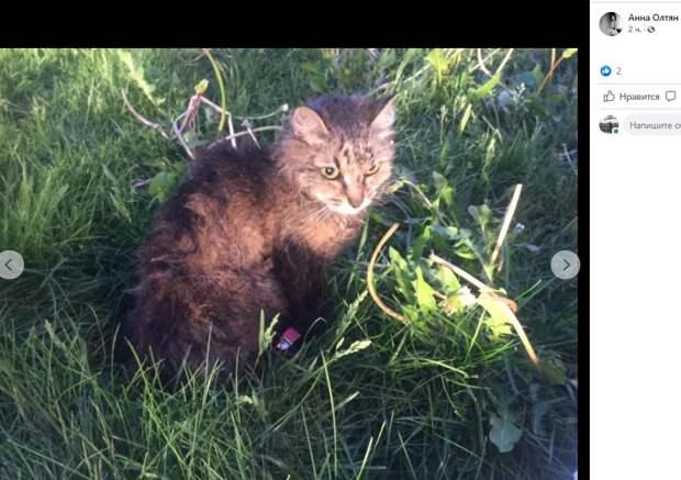 Оказавшуюся на проезжей части кошку спасли на Алтуфьевском шоссе