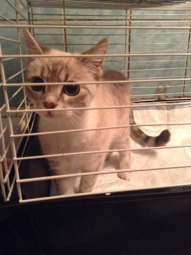 Котёнка в Валдайском проезде спасли за 5,5 тысяч рублей