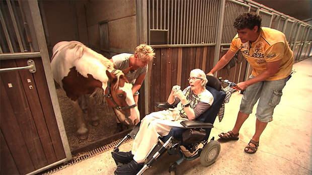Последнее желание: 87-летнюю женщину в инвалидной коляске удалось прокатить на лошади