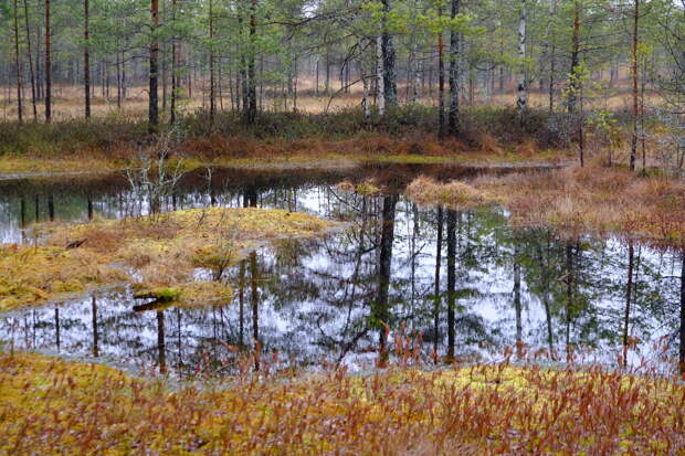 В Тверской области болота стали особо охраняемыми природными территориями