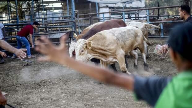 Фермеры сектора Газы несут потери из-за израильских обстрелов