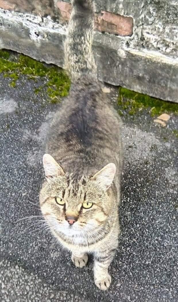 Заметьте! Откликнитесь! Помогите! Зиму он, бывшедомашний котик, на улице не переживёт...
