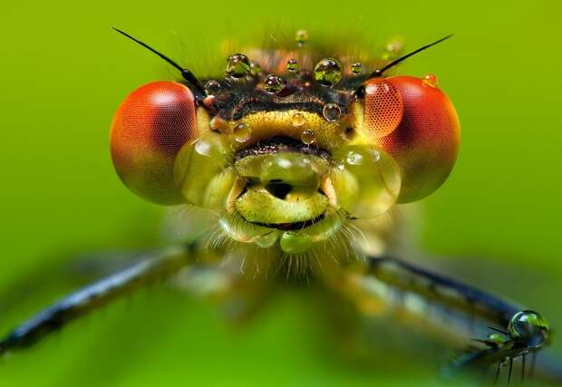 insects23 Портреты насекомых