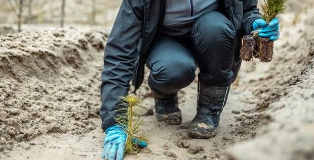 Афиша: финансы наэкологию, лесопосадки вПодмосковье ипакеты для сирот