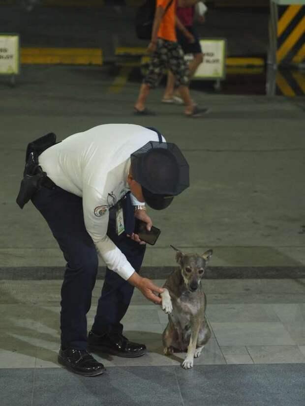 охранник и собака