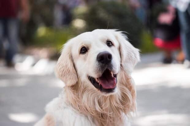 Владельцы собак счастливее, чем владельцы котиков. Догадываетесь, почему?