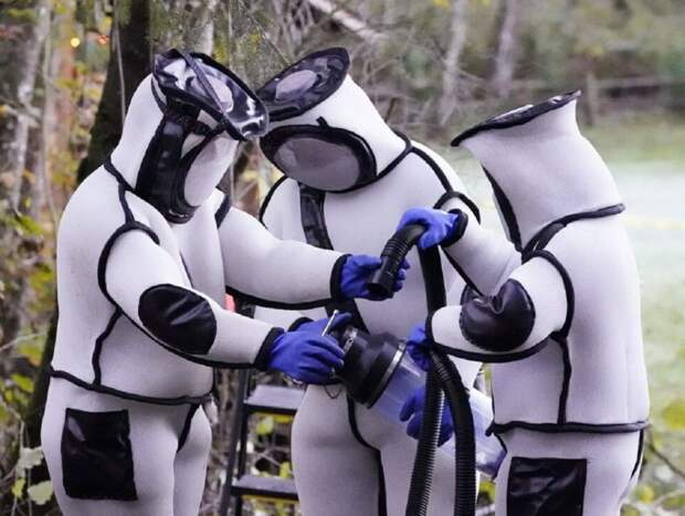 Ученые, уничтожившие в США «шершней-убийц», удивили Сеть костюмами (ФОТО, ВИДЕО)