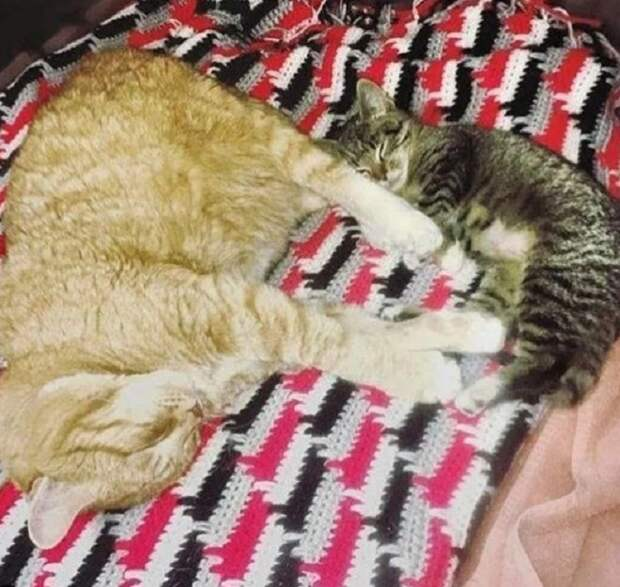 Кот и котенок спят
