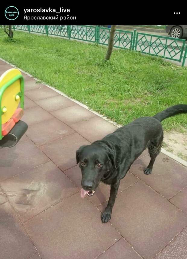 Фото дня: потерявшийся пес в Ярославском вернулся домой