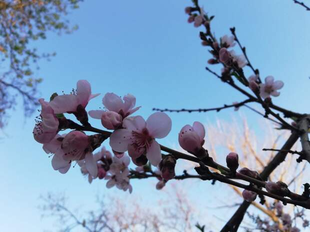 Весна (Ф. Тютчев)