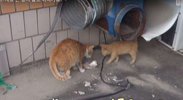 Необычное поведение бездомной кошки, которая берет едут только упакованную в пакет, до слез тронул пользователей интернета