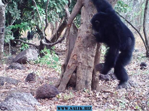 Появилось доказательство того, что обезьяны верят в бога