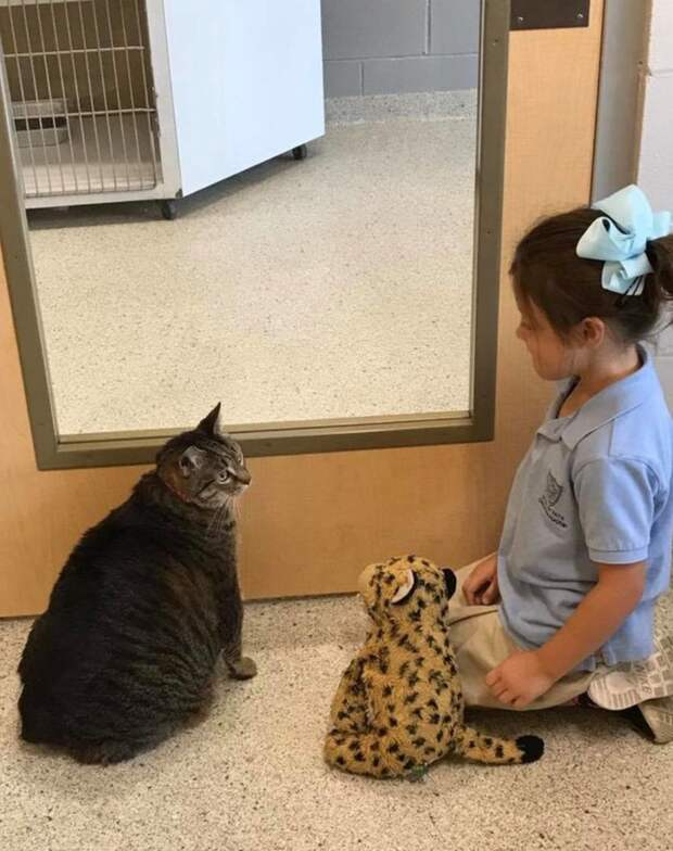 """""""Ты меня никогда не увидишь!"""" Эта кошка спряталась от вас, чтобы вы не узнали её тайну… :)"""