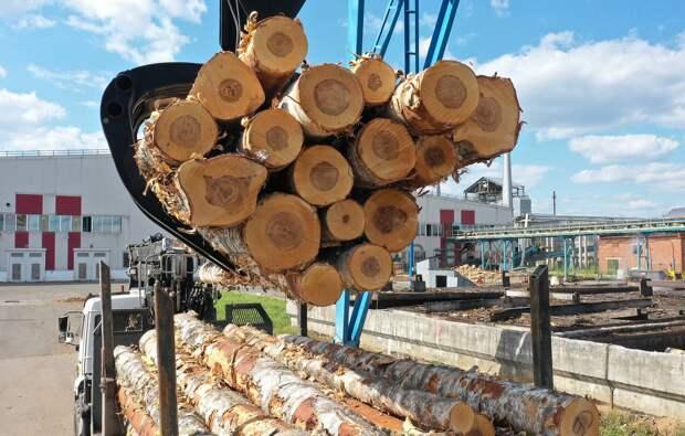 Эксперты: цены на древесину в России снизились на 10-12% от пиковых значений