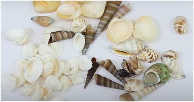 Куда пристроить ракушки, собранные на море