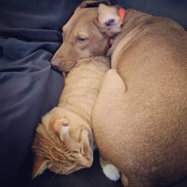 Женщина проверила, чем занимаются кошка и собака, пока ее нет дома. Видео с камеры наблюдения вас удивит