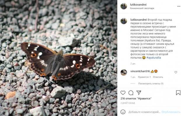 Фото дня: редкую для Москвы бабочку заметили в Химкинском лесопарке