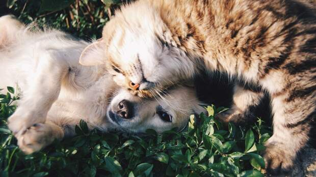 Кошки оказались преданы своим хозяевам не меньше собак