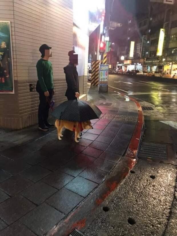 Просто собака под зонтиком, листайте дальше