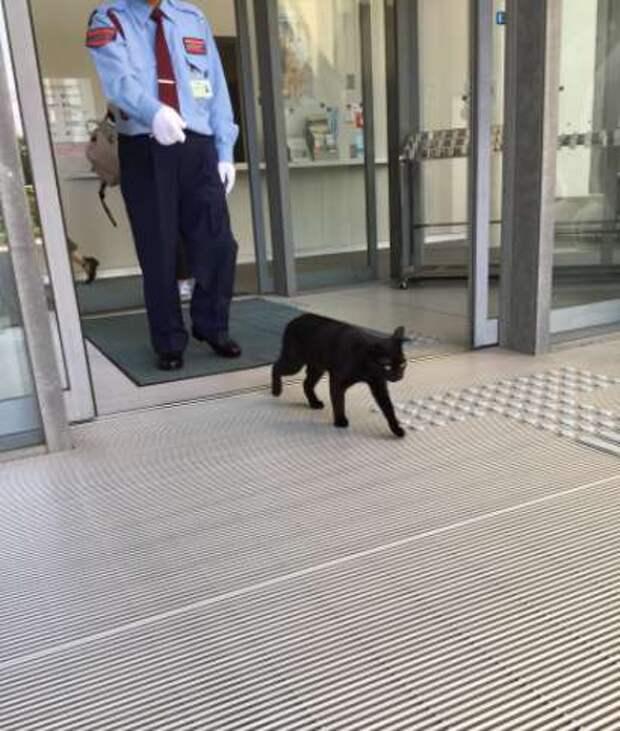 черный кот выходит их двери