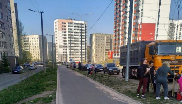 Петрозаводчане высадили деревья в трех районах города