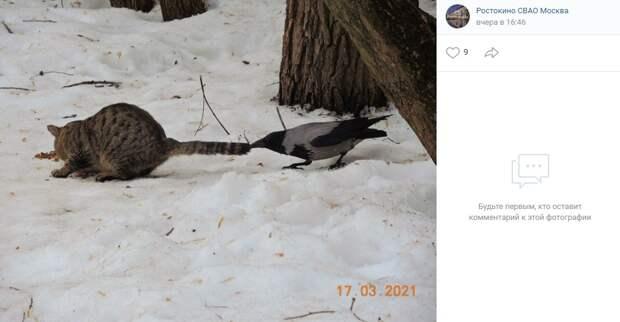 Фото дня: борьба кота и вороны в Ростокине