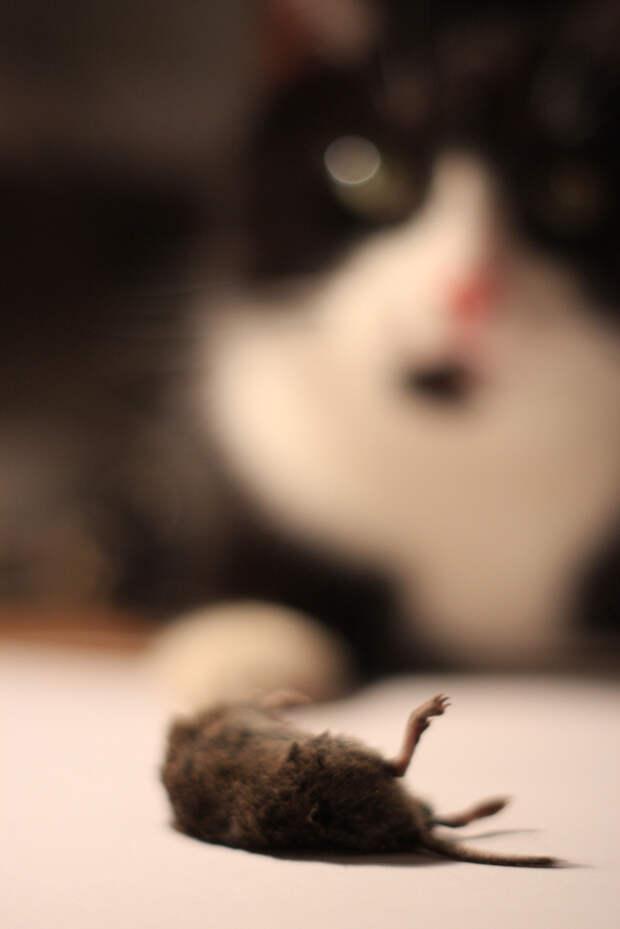 подарок от кота