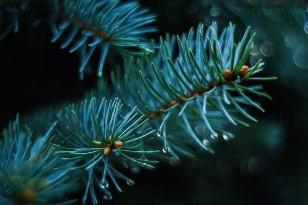Новогодние елки после праздников примут на 9-й Северной линии
