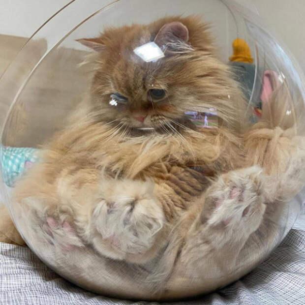 Доказательства того, что кошки — это жидкость